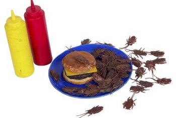 Insect infestation can sometimes require fumigation.