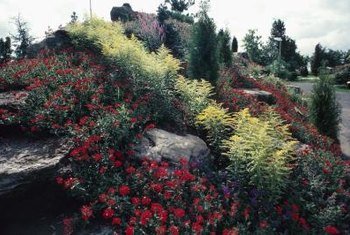 Dry, rocky hillsides can be as attractive as the rest of the garden.