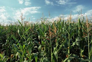 Midwest farmers have a comparative advantage for growing corn.