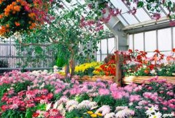 Flowers grown in a greenhouse may bloom earlier and longer.