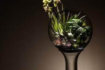 Open terrariums allow taller plants to extend beyond their glass confines.