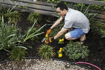 Mulching around your plants reduces weeds.