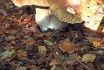 Toadstools are harmless for plants but toxic for children.