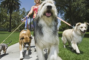 Pet sitters provide many services, including dog walking.