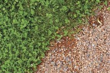 Groundcovers grow dense to cover exposed soils.