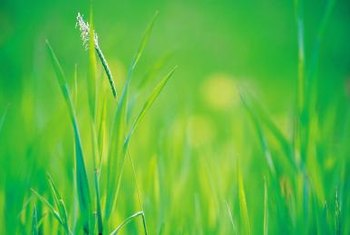 Most grasses grow best in full to part sun.