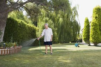 Proper care can keep your lawn healthy and green.