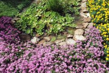 Select ground cover plants that will thrive in your landscape environment.