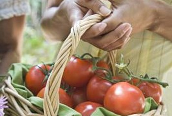 A good harvest of luscious tomatoes is produced in fertile soil.