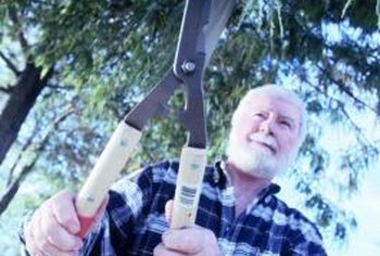 Encourage healthy growth of your cottonwood tree with proper pruning techniques.