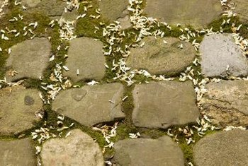 Moss enhances the rustic appeal of a fieldstone path.