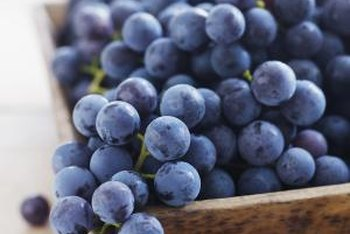 Concord grapes requires sunlight to produce large berries.