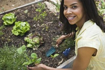 Natural fertilizers are plant or animal-based materials that provide a slow-release form of fertilizer for your soil.