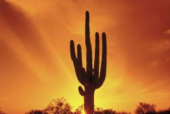 Although cactus can handle tough environments, they are susceptible to microbiological threat.
