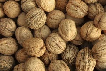 Walnuts grow on trees that reach 50 or more feet in height.