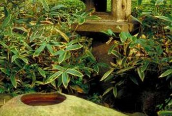 Well-chosen plants and hardscape can keep the area beneath your feeder looking tidy.