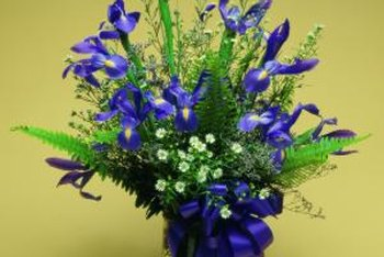 Miniature iris flowers are suitable for cutting gardens.