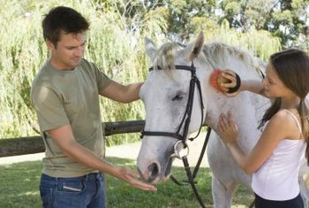 Equine therapists involve patients in horse grooming activities.
