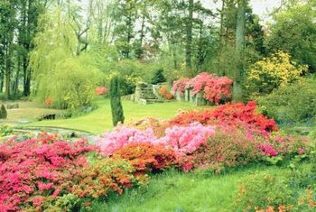 Azaleas benefit from regular pruning.