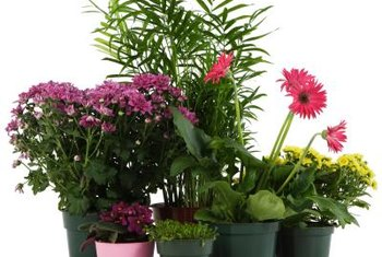 Research different houseplant varieties to decide the best fit for your lifestyle.