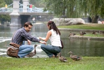 Ducks are entertaining in a park but can be a garden nuisance.
