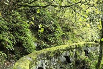 Mosses are the most primitive land plants that are living today.