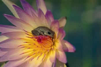 When properly controlled, water lilies benefit aquatic wildlife.