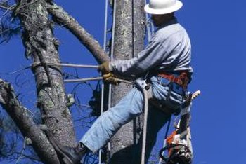 Leave pruning of large branches high up in a tree to the professionals.