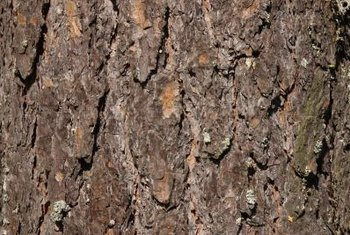 Pine tree bark, reduced to small particles, adds nutrients to bonsai soil.