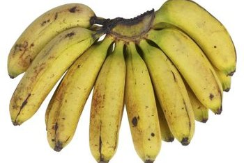 Dwarf Lady Finger banana plants produce 4- to 5-inch-long bananas.