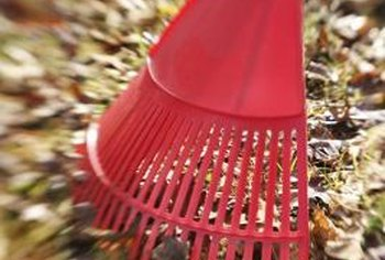 Raking spiky sweetgum balls may prevent ankle-turning injuries.