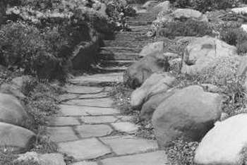 Stones and plants create dynamic landscapes.