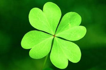 Four leaf clovers may be lucky, but all clovers help to return nitrogen to the soil.