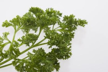 "Use saltpeter to speed up germination of ""slow"" seeds such as parsley."