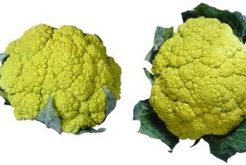 Broccoflower ranges in color from greenish yellow to lime green.