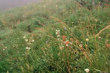 Some wildflowers adapt well to hilly conditions.