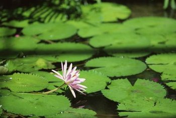 Some aquatic plants have an invasive nature, so choose the plants carefully.