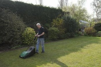 Keep lawns mowed to the proper height to prevent diseases and problems.