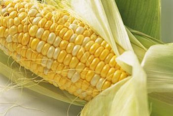 Sweet corn cobs are smaller than field corn cobs.