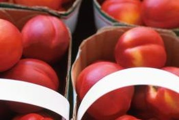 Nectarines need a balanced program of watering, fertilizing and caring to produce full-sized fruits.