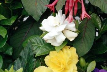 Begonias come in enough variety to fill a shady balcony.