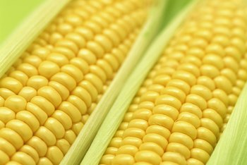 For full development, sweet corn requires ample growing space in home gardens.