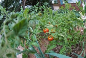 Tomatoes have many allies in the garden.