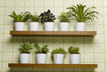 Proper treatment prevents potted plants from bringing in unwelcome visitors.