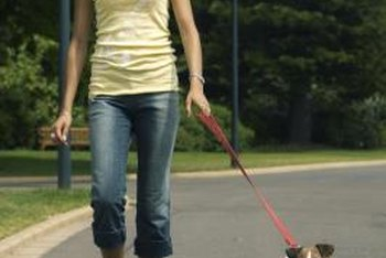 Walking your dog for 45 minutes won't just benefit your pet.