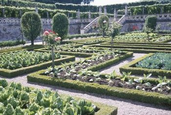 Low hedges can be grown for visual interest within a larger space.