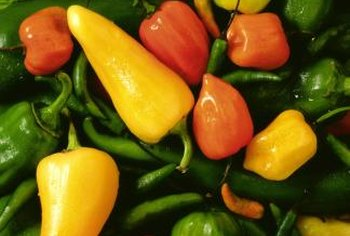 Rid your pepper plants of whiteflies and enjoy a rich harvest.