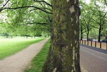 Mature trees provide welcome shade but may damage sidewalks.