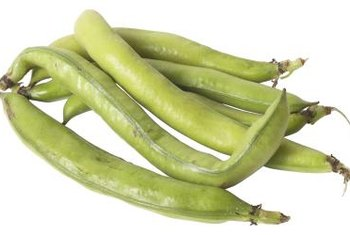 Snap beans grow more quickly than shell and dry bean varieties.