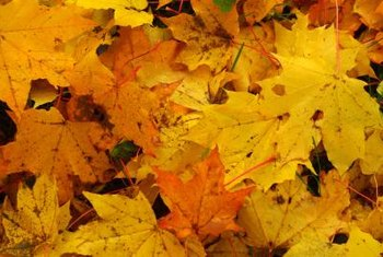 Leaf piles that remain on concrete can create stubborn stains.